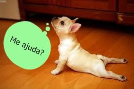 pilates-cachorro-2